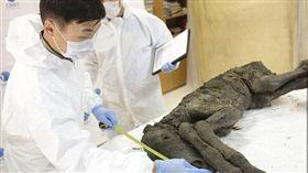 科學家在俄羅斯發現一隻保存完整的古代馬種。(圖/翻攝自每日郵報)
