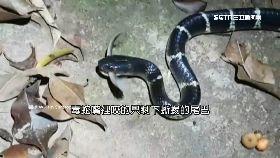 抓蜂蛇好賺1800
