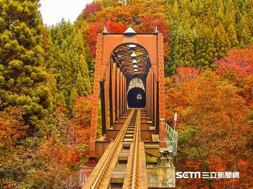 賞楓,「秋田內陸縱貫鐵道」是日本東北著名的賞楓鐵道。(圖/易遊網提供)