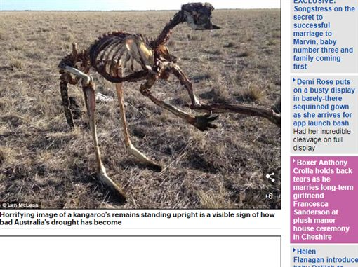澳洲,袋鼠,乾旱,乾屍,農民http://www.dailymail.co.uk/news/article-6051303/Confronting-photo-dead-kangaroo-upright-highlights-reality-Australias-drought.html