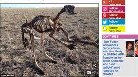 澳洲,袋鼠,乾旱,乾屍,農民 http://www.dailymail.co.uk/news/article-6051303/Confronting-photo-dead-kangaroo-upright-highlights-reality-Australias-drought.html