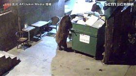 棕熊兩腳站立,像人類一樣拉著垃圾箱。