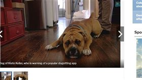 請人幫遛狗 飼主回家驚見3P活春宮 溜狗,Wag!,科羅拉多泉,3P,APP https://www.fox21news.com/news/local/dog-sitting-gone-wild-owner-comes-home-to-find-shirtless-men-lube-in-living-room/1400647366