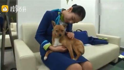 韓國一隻流浪狗Dony原本被丟棄在停車場,後來被一名空姐帶回辦公室,成為航空公司的吉祥物,每天坐擁在一堆漂亮空姐,時不時還會求抱抱、求撫摸。不少網友看到後,紛紛直呼「真的是好狗命!」(圖/翻攝自糗事百科)