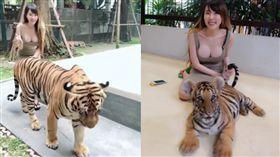 看得見小老虎嗎? 一堆人只看到正妹撞奶(圖/翻攝自picbear.online)