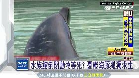 丟海豚等死1600