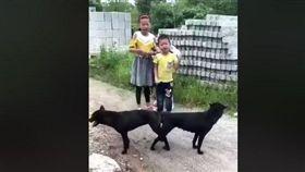 見黑狗野外拔河 童言童語惹笑網友。(圖/翻攝自臉書爆笑公社)