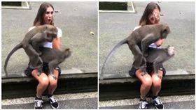 峇厘島,猴子,活春宮,大腿(圖/翻攝自camillavalotti IG)