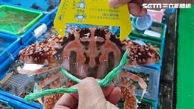 萬里蟹,花蟹,三點蟹,石蟳,抱卵