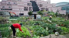 全台最貴菜園賣出了台北市信義區世貿一館正對面,從「全台最貴菜園」到籃球場的789.83坪土地D1,18日以新台幣35.5億元由富邦資產售予盈保發展公司。圖為民國100年間,當地仍作為菜園使用。(檔案照片)中央社 107年4月18日