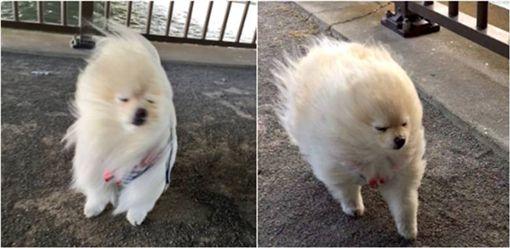 寵物,狗狗,毛小孩 圖/翻攝自推特