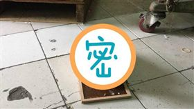 板橋,黏鼠板,雞(圖/翻攝自臉書)