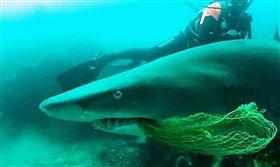 教練不顧自身危險協助鯊魚擺脫漁網 鯊魚回頭眼神有感謝! 新媒體 鯊魚,澳大利亞,海洋垃圾