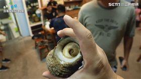 半隻手掌大的海螺
