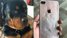 蘋果秋季新品發表會,iPhone,手機,咬爛(圖/翻攝自爆廢公社)