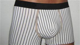 ▲沃德爾天生沒有陰莖。(圖/攝影者WCM, 翻攝自Wikimedia Commons) https://pt.wikipedia.org/wiki/Ficheiro:Boxerbriefs1.JPG
