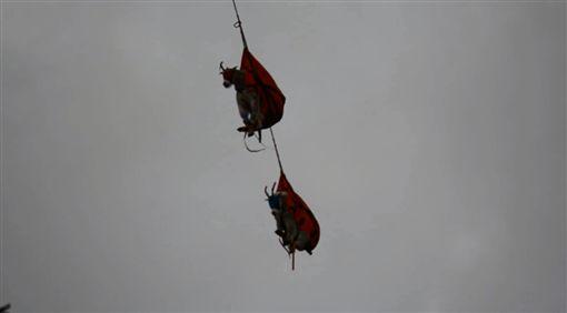 抬頭驚見「飛天羊肉串」 原來是在…山羊,遷徙,氾濫翻攝自推特