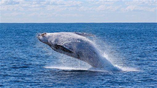 提案遭否決!委員會不恢復商業捕鯨 日本揚言退出IWC(圖/翻攝自pixabay)