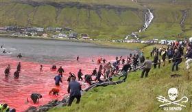 法羅群島,丹麥,屠殺,海豚,鯨魚(圖/翻攝自臉書 Sea Shepherd UK)