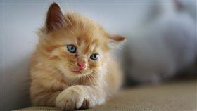 小貓,貓咪,/翻攝自Pixabay