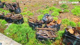 颱風,豪雨,漂流木,新北市農業局