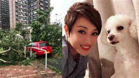 香港小姐出身的資深女星陳法蓉颱風山竹肆虐後家門外慘況。(圖/翻攝自陳法蓉微博)