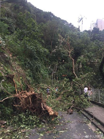 山竹颱風侵襲香港,路樹倒塌,路人遭壓(圖/翻攝自微博)