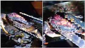 螃蟹,中秋節,烤肉,寄生蟲(圖/翻攝自爆笑公社)