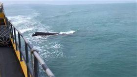 屏東,小琉球,客輪,鯨魚,乘客(圖/翻攝自臉書小琉球聯盟)