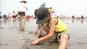 高美挖蛤蜊1200