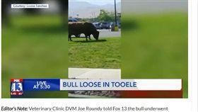美國,公牛,包皮(圖/翻攝自《福斯新聞》)