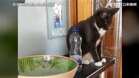 喵皇很不喜歡放在牠身旁的罐罐。