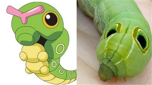 綠毛蟲,寶可夢,手遊(圖/翻攝自臉書爆廢公社)