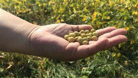 使用台灣原豆古法釀造 豆油伯原汁原味呈現