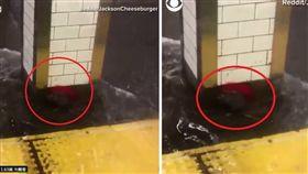 颶風「佛羅倫斯」強襲美國,紐約地鐵站傳出淹水災情,一隻被困在地鐵站內的老鼠也受淹水之苦,只能躲在柱子後面抗衡洪水。不少美國網友看到後,紛紛希望「吉鼠自有天相!」(圖/翻攝自推特)