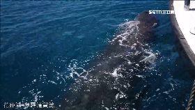 L賞鯨人鯨危0930