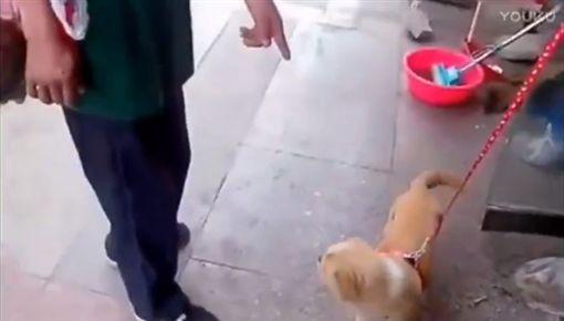 狗狗和主人分離時忍不住泛淚,網友看了心都碎了。(圖/翻攝優酷)