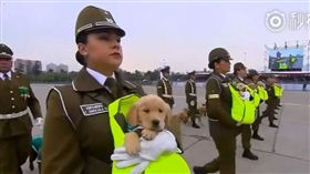 國慶,警犬,智利(圖/翻攝自臉書貓貓狗狗世界趣聞快快樂樂每一天)