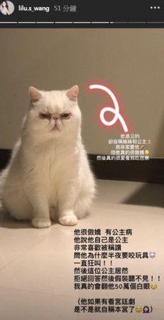 小蠻的貓很傲嬌(圖/小蠻ig)