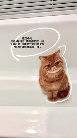 小蠻很愛貓(圖/翻攝自小蠻ig)
