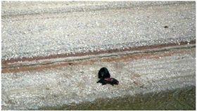 見熊獵殺同類來吃 原住民:心裡發寒 過度開發,野生動物,黑熊 https://www.cbc.ca/news/canada/british-columbia/bear-eats-bear-central-bc-1.4833151