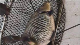 兒子釣蝦場釣出「肥美大鯉魚」 母傻眼:說好的蝦蝦咧? 圖/翻攝臉書