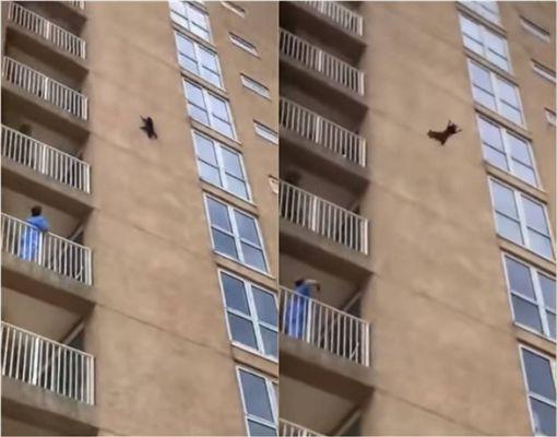 影/小浣熊「跳10層樓」秒落跑 民眾驚呼:牠還活著! 圖/翻攝yt
