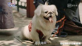 《延禧攻略》北京狗。(愛奇藝台灣站提供)