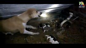 ▲狗媽媽奮力對抗眼鏡蛇。(圖/翻攝自Youtube)