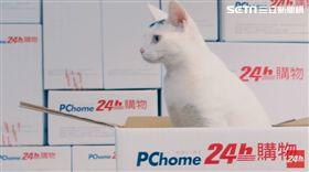 電商,PChome網路家庭,PChome24h購物,蝦皮,創宇,熊仔