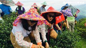 旅遊,農村旅遊,新北市農業局,來去農家DO一日,生態農村體驗,萬里蟹,茭白筍