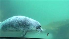 美國的奧勒岡動物園海豹Kaya.(圖/翻攝自Oregon Zoo Twitter)