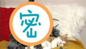 貓咪,日本,9gag,捉弄