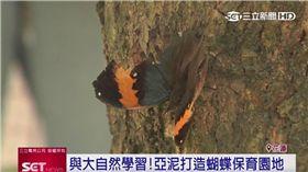 與大自然學習!企業打造蝴蝶保育園地